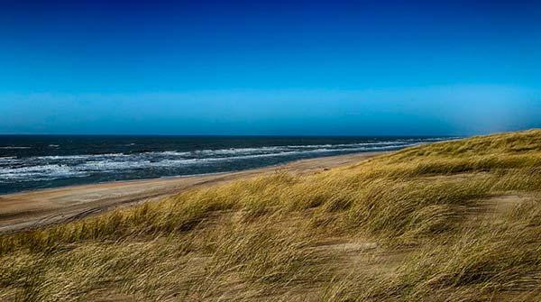 dunas costeras con vegetación