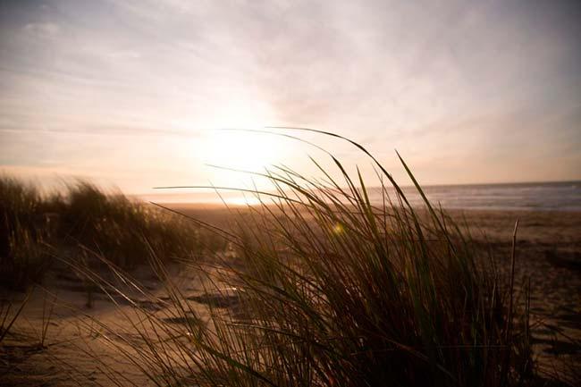 sistema dunar costero