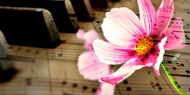 musica para plantas