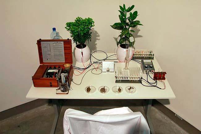 musica plantas poligrafo experimento