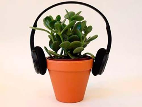 planta con auriculares