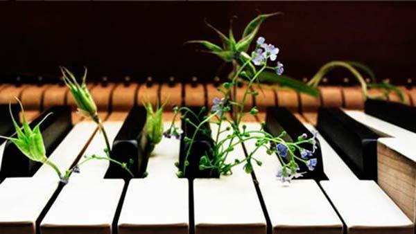musica clasica para plantas