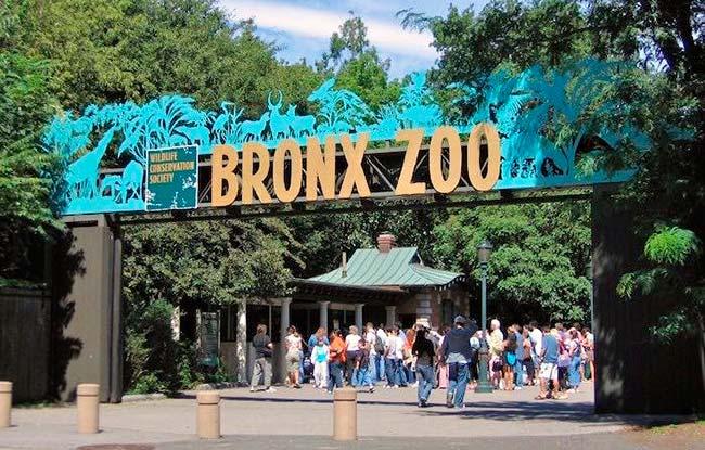 Zoo de Bronx