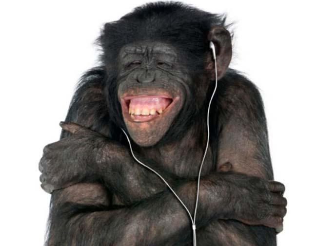 musica para monos