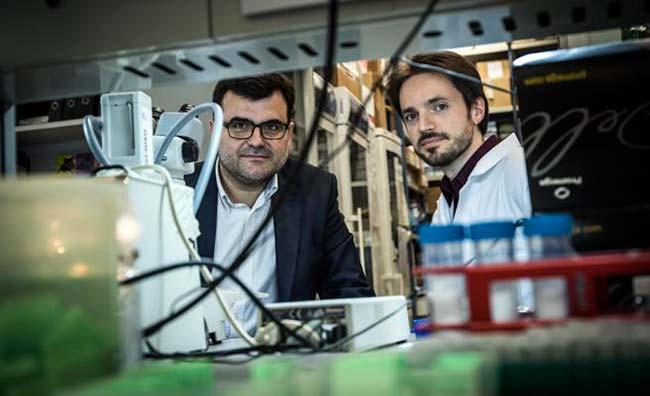 investigadores IRB Barcelona