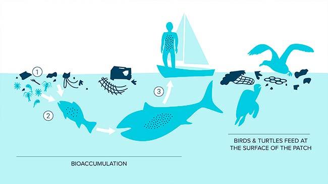 bioacumulacion microplasticos