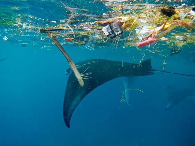 plasticos flotan en el mar