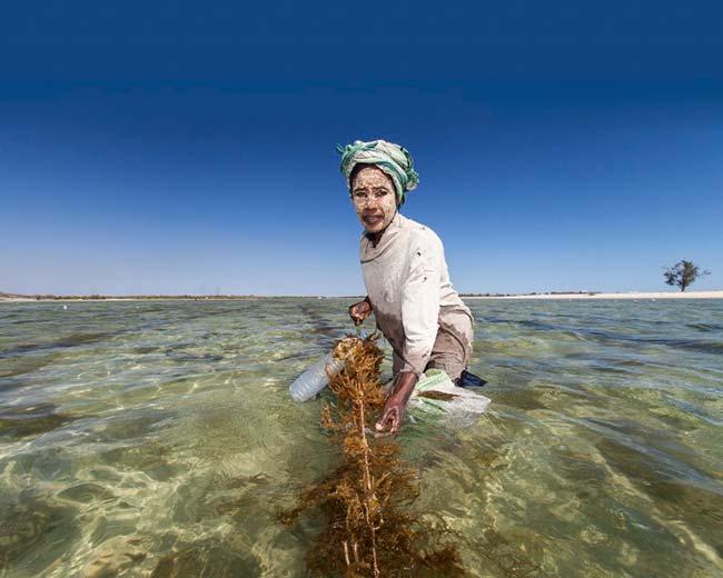 contaminación marina redes de pesca