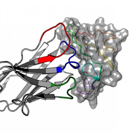 proteína EGF