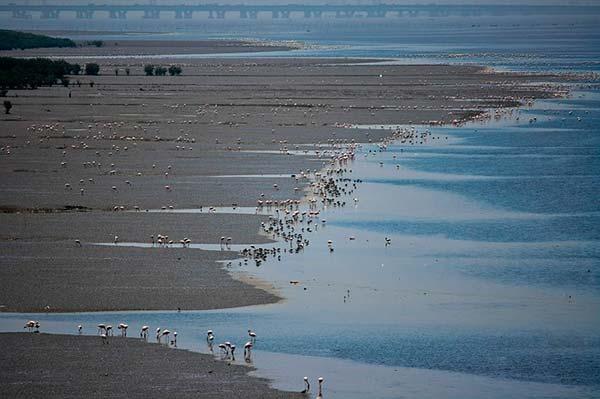 energia mareomotriz en canrias