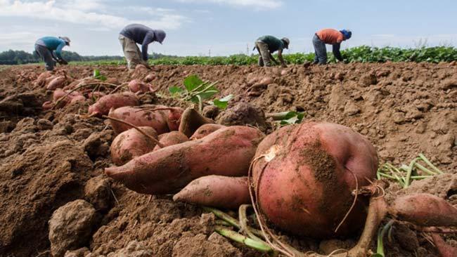 alimentacion ecologica beneficios