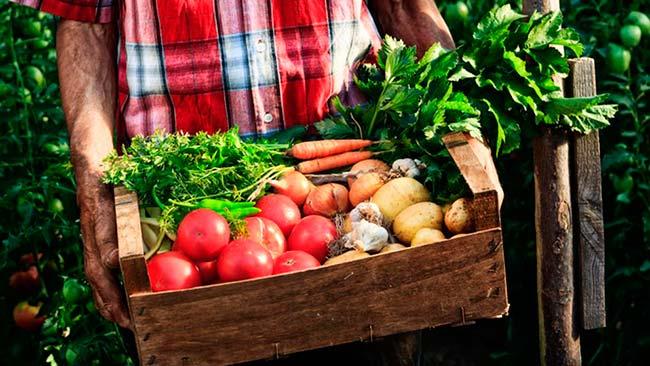 alimentos ecologicos definicion