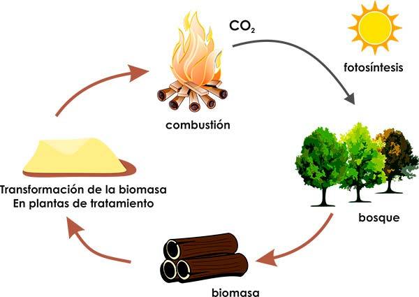 esquema ciclo biomasa energia renovable