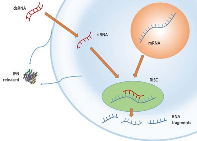 ARN de interferencia