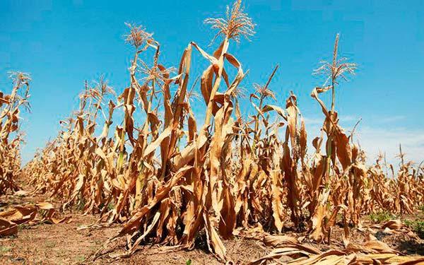 consecuencias calentamiento global agricultura