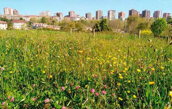 proteccion de la biodiversidad