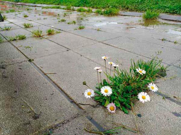 malas hierbas en ciudad