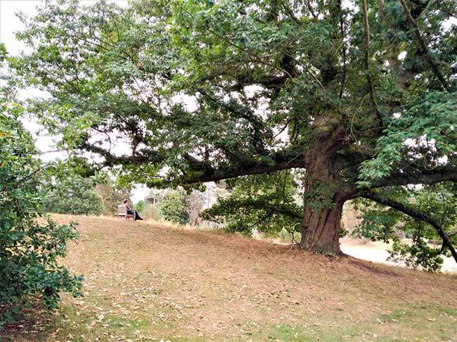 conservación de arboles antiguos