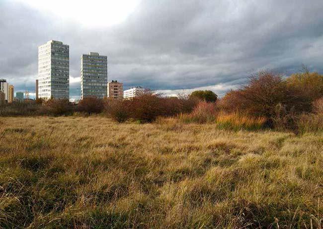 medidas para la conservacion de la biodiversidad en ciudades