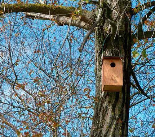 cajas nido para arboles en Santander