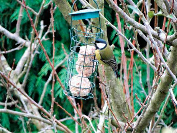 comederos para aves como medida para proteger la biodiversidad