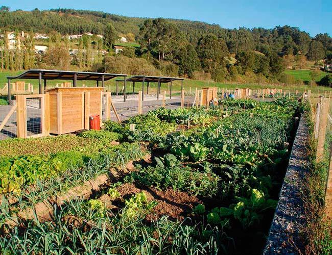huertos urbanos agricultura ecologica