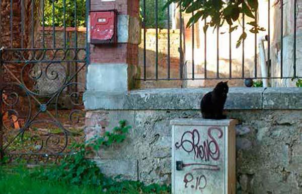 control de gatos callejeros en ciudades
