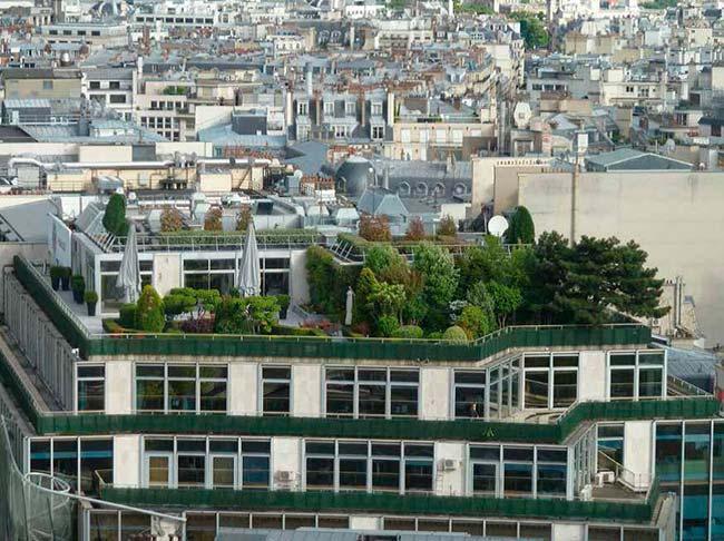 tejado verde como medida para la conservacion de la biodiversidad