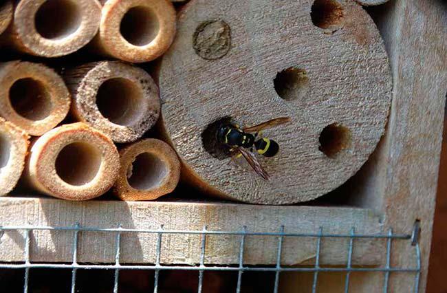 Avispa en hotel de insectos