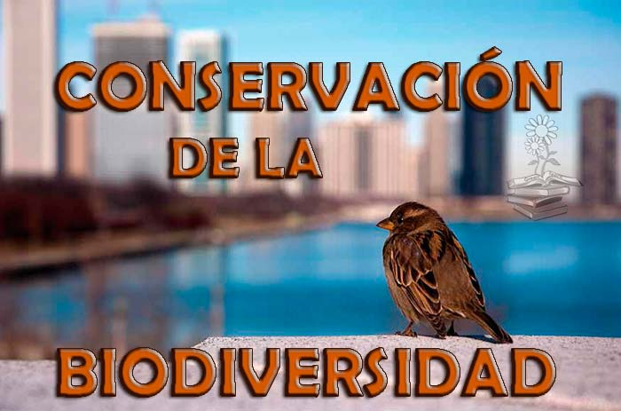 medidas para la conservacion de la biodiversidad