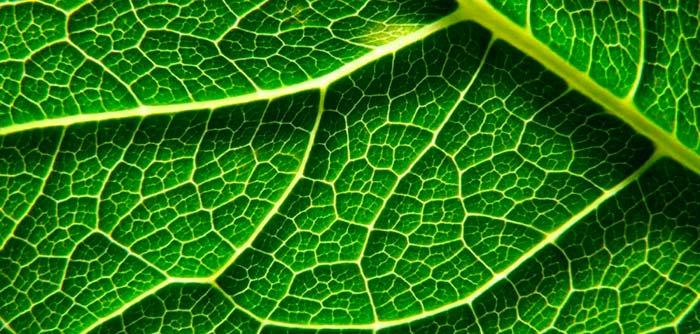 origen de la fotosintesis oxigenica Portada