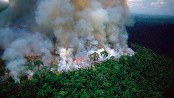 incendios del Amazonas Portada