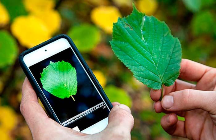 Plagapp, otra aplicación que reconoce plagas de cultivos