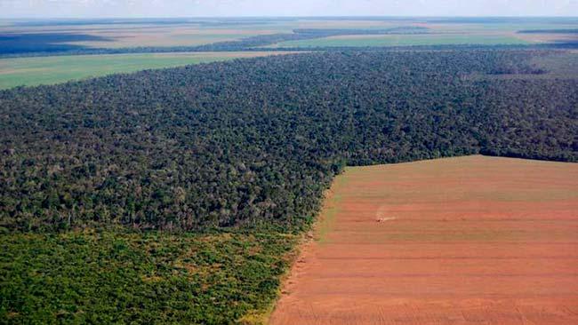 deforestacion en la Amazonia