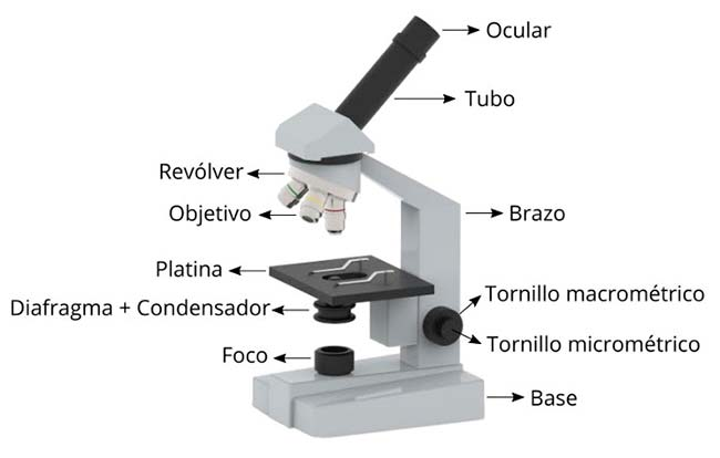 microscopio dibujo partes esquema