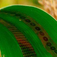 sensores de grafeno para plantas portada