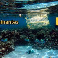 contaminantes en plasticos marinos portada