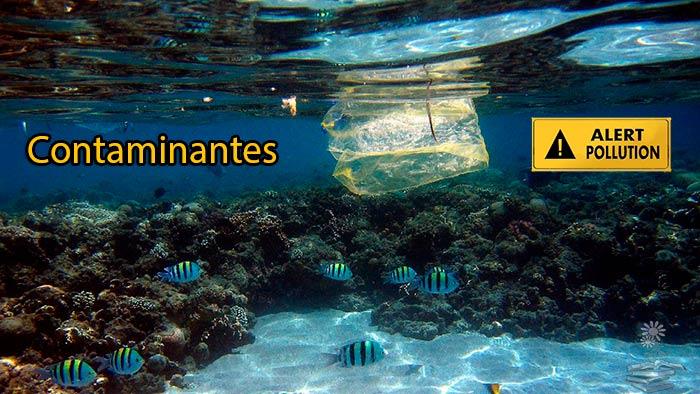 Contaminantes en plásticos marinos del Giro Subtropical del Pacífico Norte