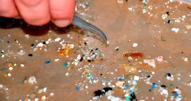 contamiantes plasticos en sedimentos