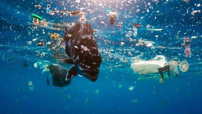contaminantes en plasticos marinos y animales