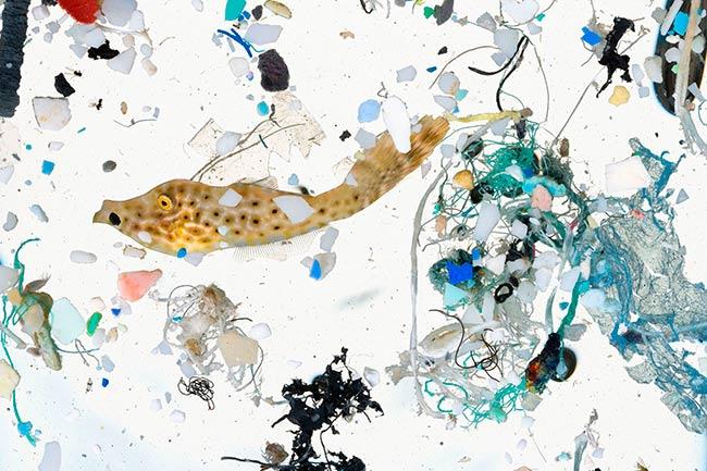 microplasticos en animales marinos