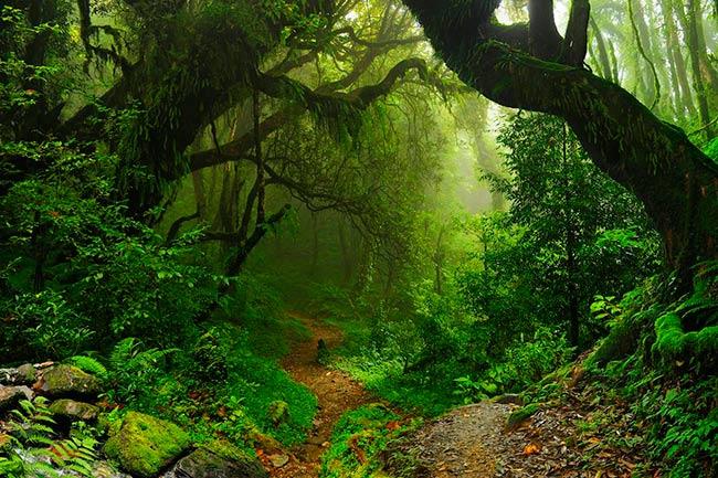 Zero Draft de la Onu para proteger la biodiversidad