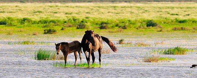 caballos marismas de Doñana