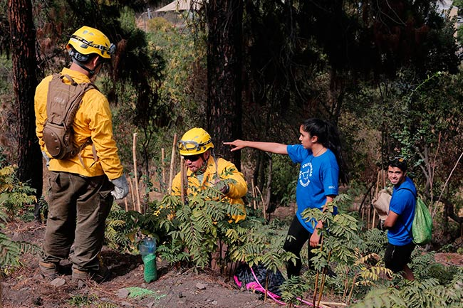 plan reforestacion tras incendio