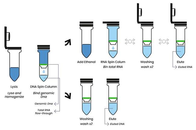 extraccion ARN Elysia
