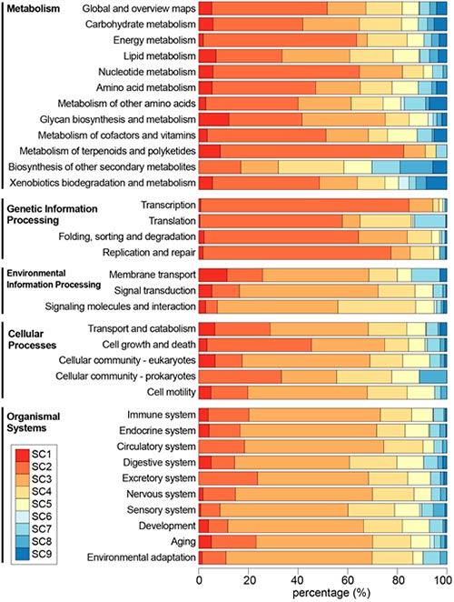 clasificacion funciones geneticas Figura Elysia Chlorotica