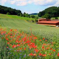 flores silvestres para disminuir el uso de pesticidas portada