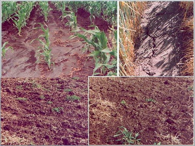 erosion del suelo pdf
