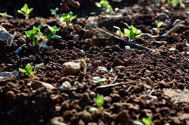 degradacion del suelo consecuencias