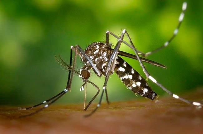 cambio climatico y mosquito tigre transmisor de virus